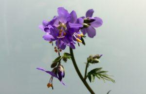 Wildbienen Ansiedlung VII