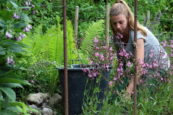 Gartenplanung Pflanzplanung Wetzikon