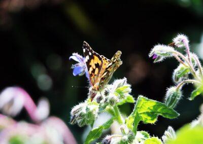 Gartenpflege Gartenbau Wetzikon Biodiversität