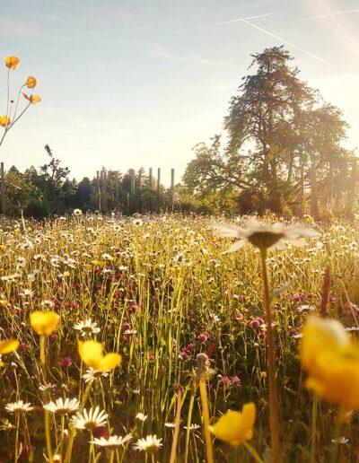Gartenbau Wetzikon Bio