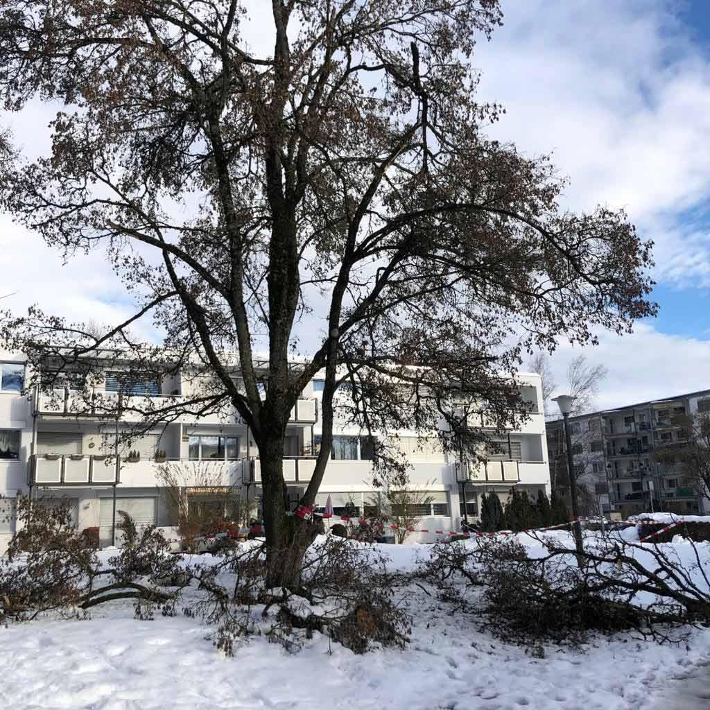 Winter-Gartendienst-Wetzikon